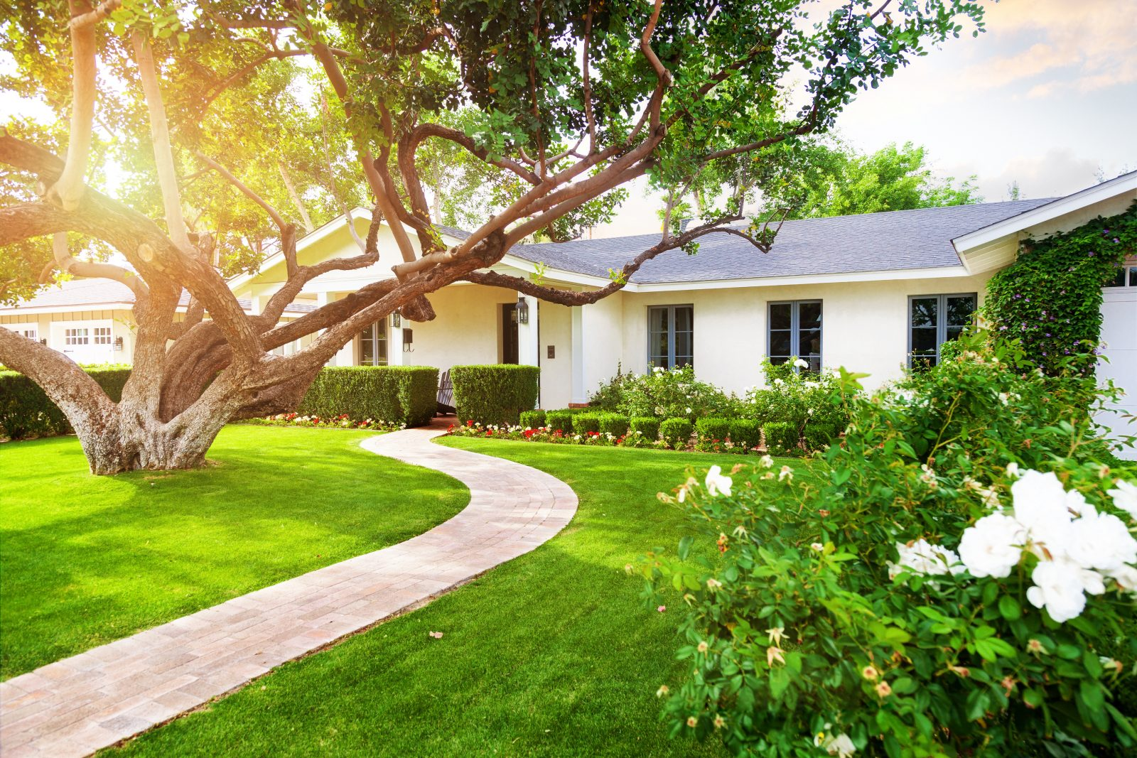 Beautiful white color single family home in USA with big green grass yard, large tree and roses